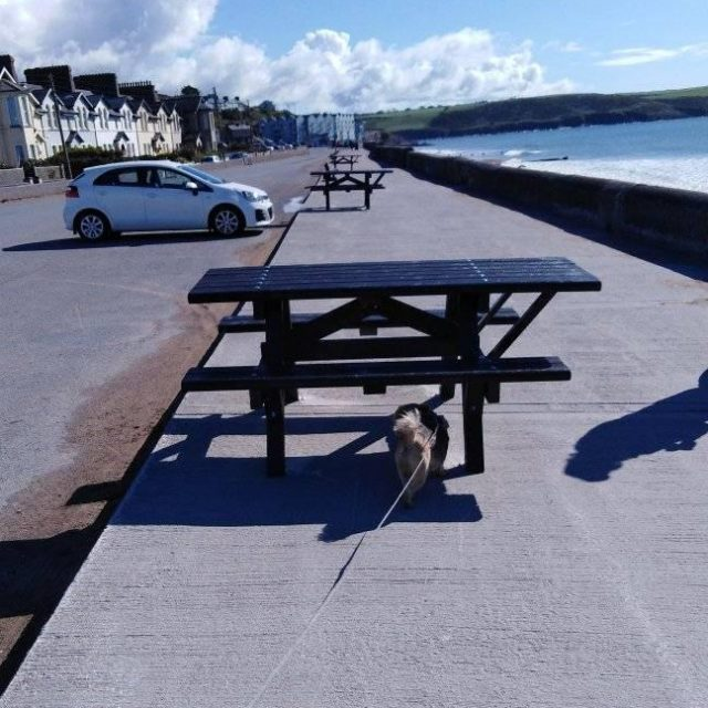 Front Strand Picnic Benches